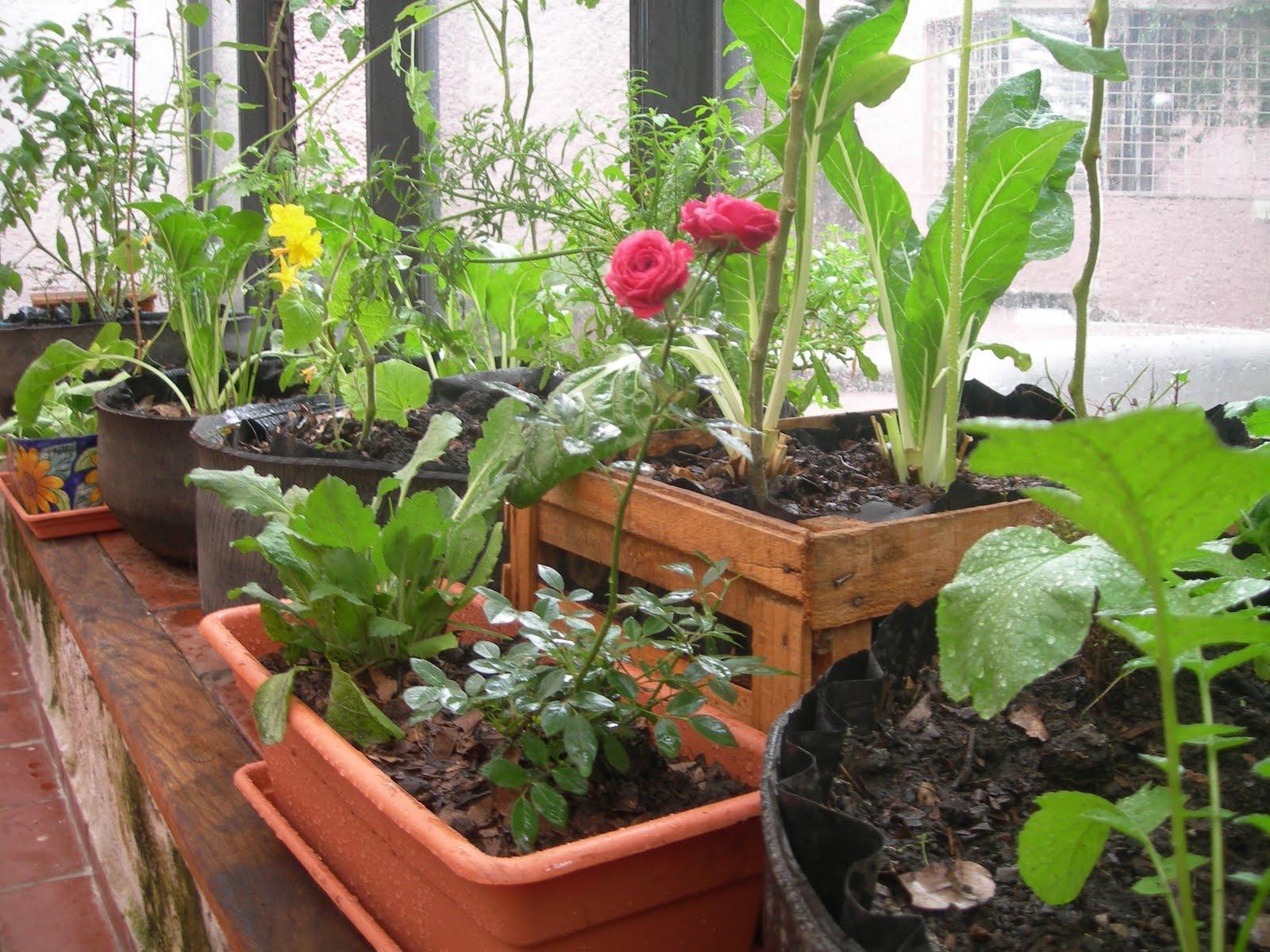 Asociaci n de plantas en el huerto el huerto de urbanoel for Cultivar vegetales en casa