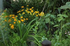 Flores y Vegetals - Huerto de Urbano