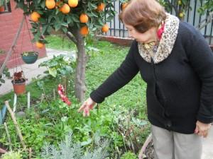 Edith Castillo y su Huerto - Huerto de Urbano