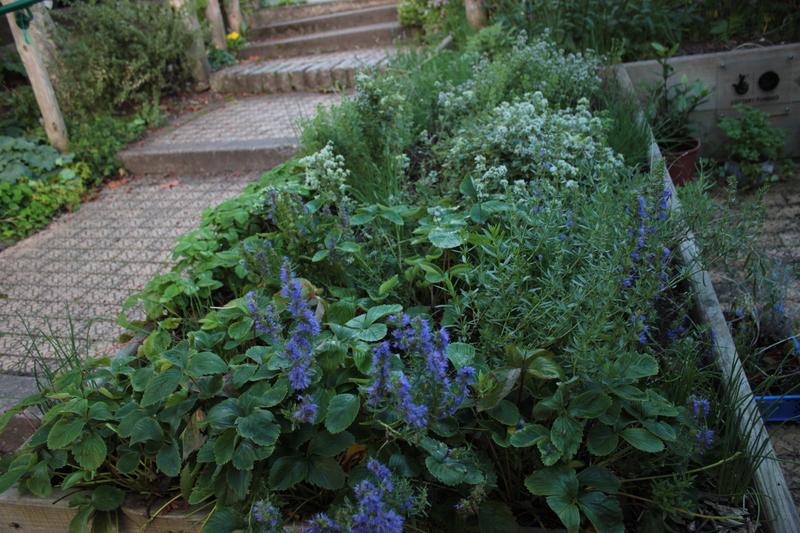 Baño De Tina Con Hierbas:Jardín de Hierbas en casa o departamento – Huerto de Urbano