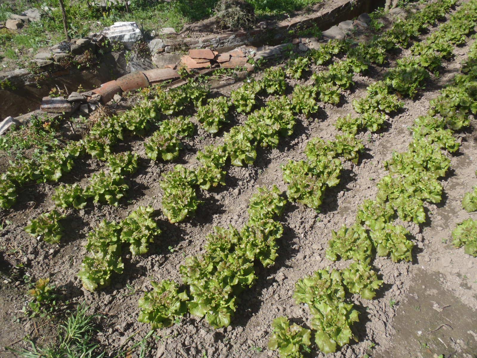La primavera en la huerta de arroyo el huerto de for Cultivo pimiento huerto urbano