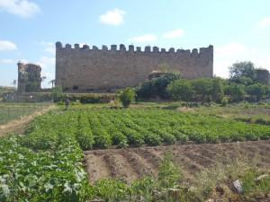 La Huerta de Arroyo - Huerto de Urbano