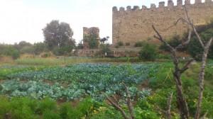 Huerta Gandaya - Huerto de Urbano
