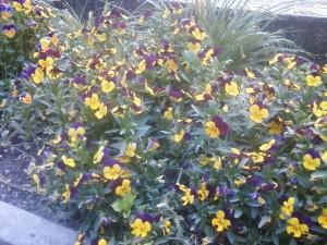 flores huerto - Huerto de Urbano