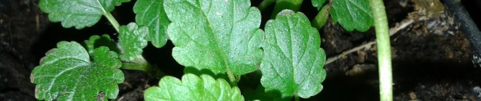 Hierbas medicinales 1