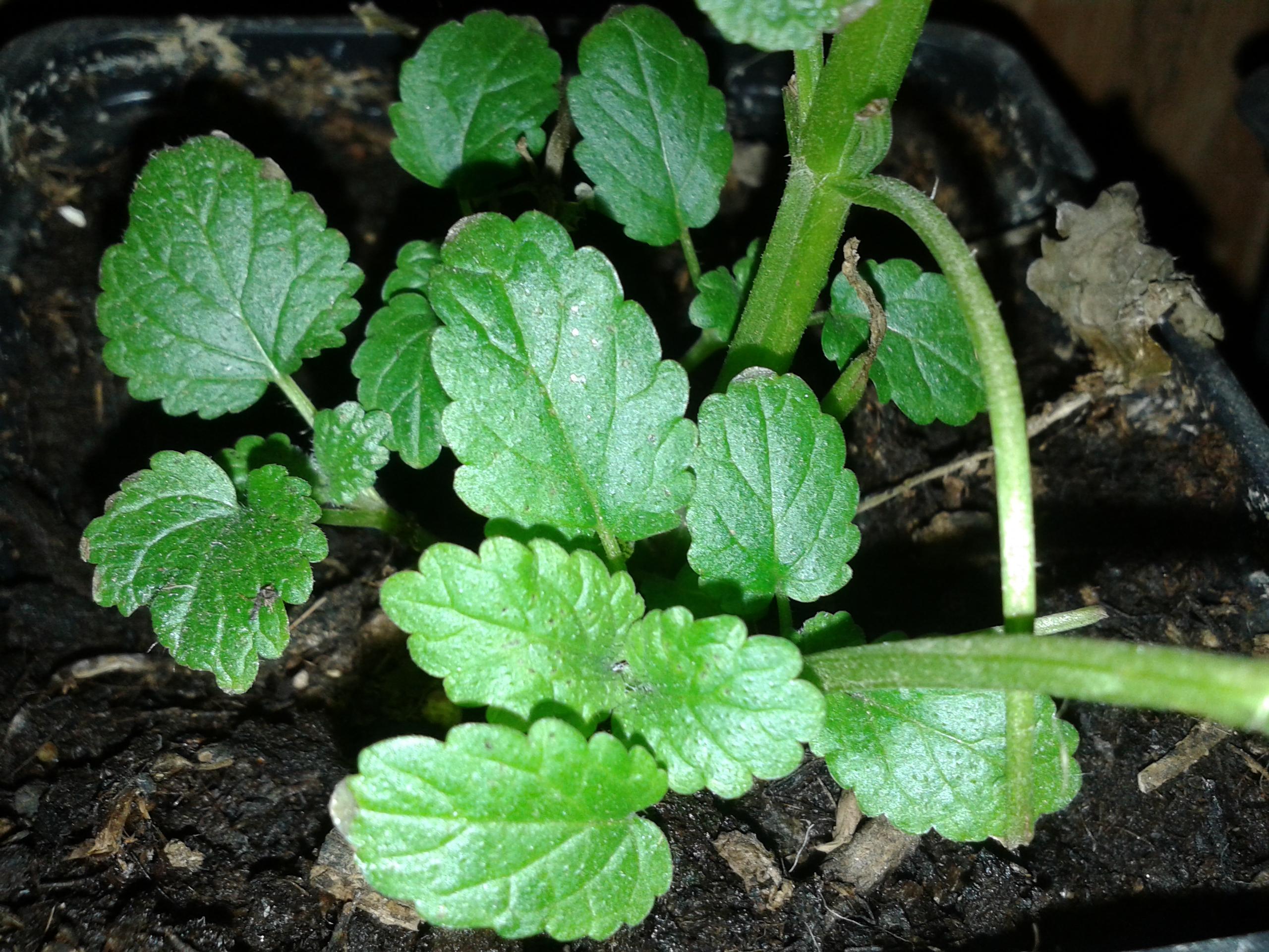Secretos curativos de las plantas el huerto de urbanoel for Hierbas y plantas medicinales