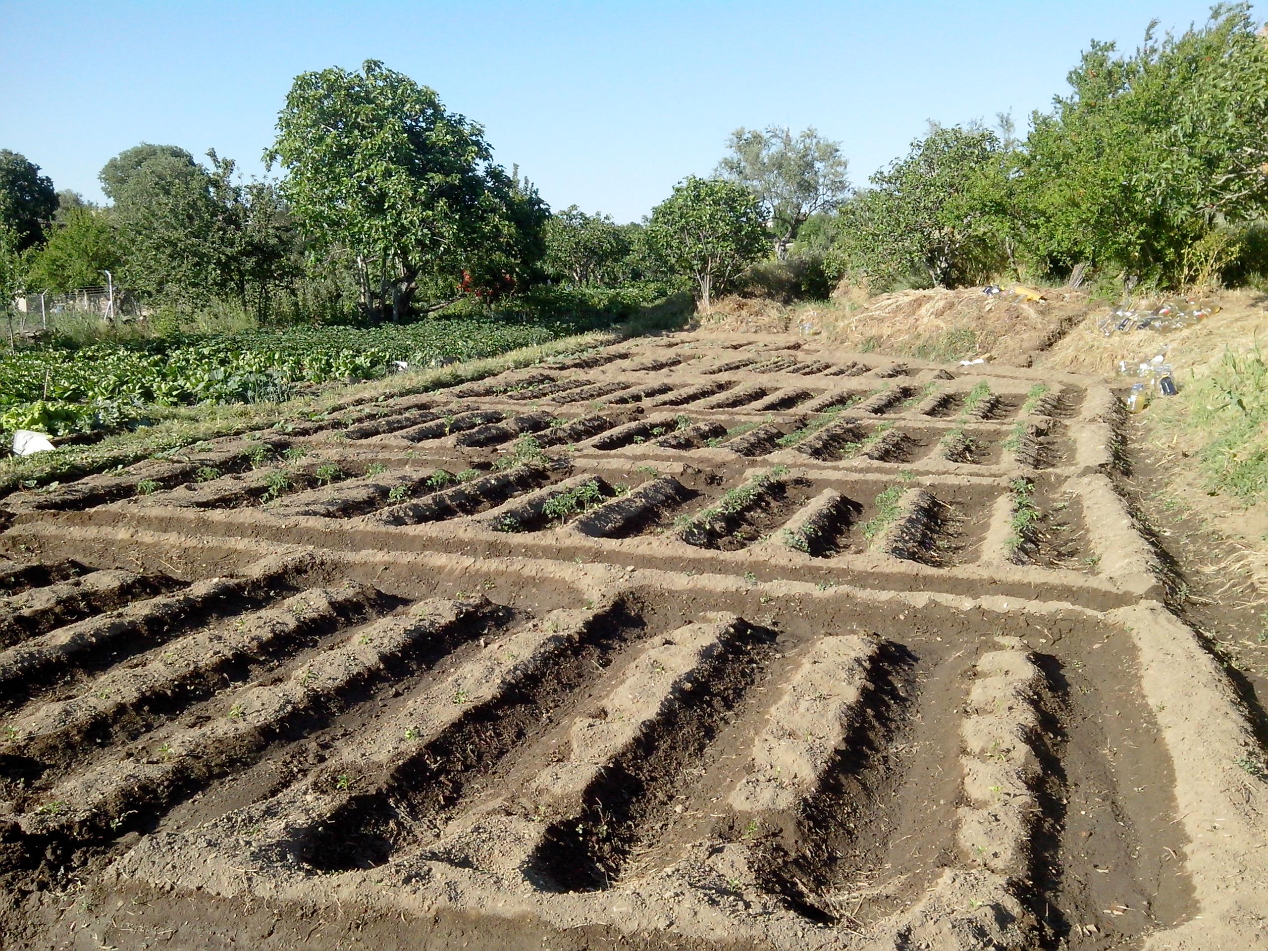Asociaci n de cultivos la huerta pironga el huerto de for Asociacion de plantas en el huerto